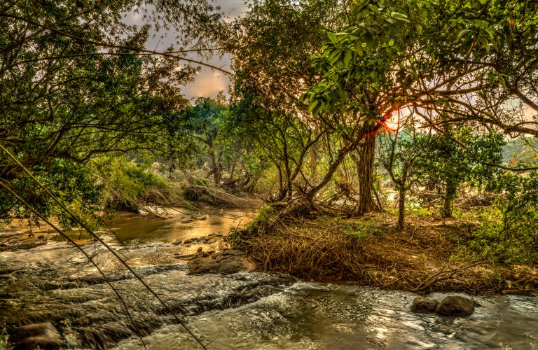 Quiet by the river, CGH Earth - riverside retreat- periyar river 7