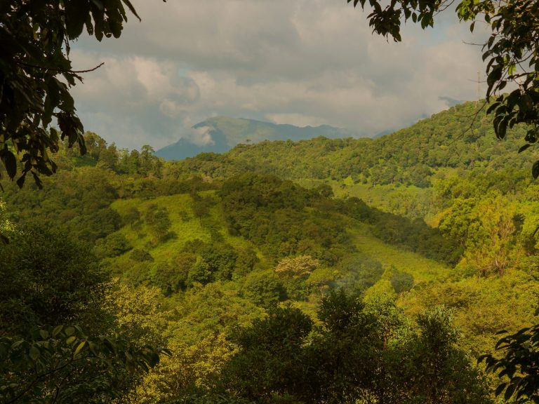 Wayanad Wild - VIew from the resort